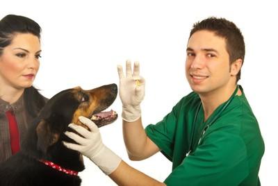 薬を持つ獣医師と口を開けている犬