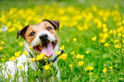 花に囲まれている犬