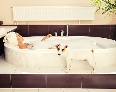 飼い主とお風呂に入ろうとする犬