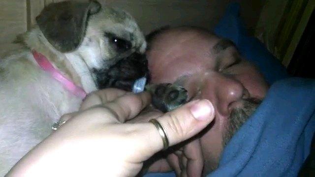 犬の口に伸ばす人の手