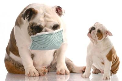 風邪の犬とそれを見る子犬