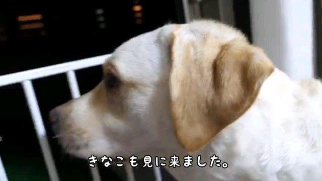 きなこも~字幕