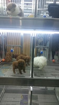 ガラスケースの子犬