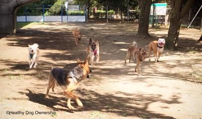 走っている犬たち