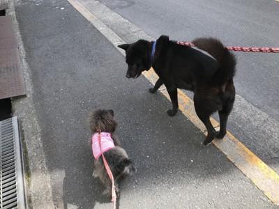 散歩中のエマ