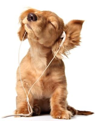 音楽を聴く犬