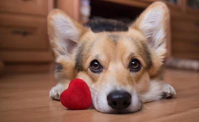 赤いハートと犬