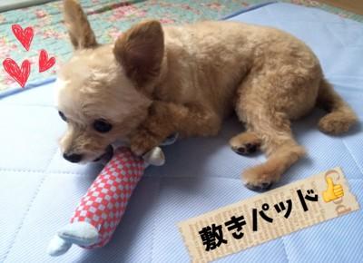 #敷きパッド、犬#
