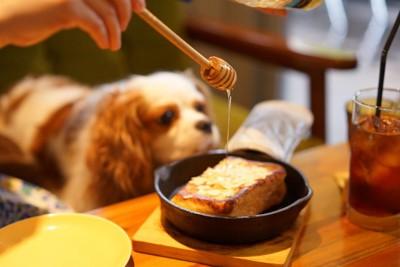 食事をする飼い主の隣にいる犬