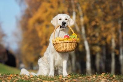 果物のバスケットをくわえている犬の写真