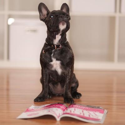 雑誌を読む犬