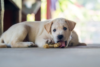 オヤツを食べる犬