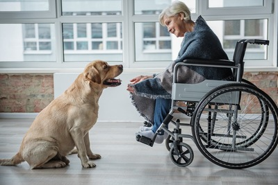 座るラブラドールと車椅子に乗った女性