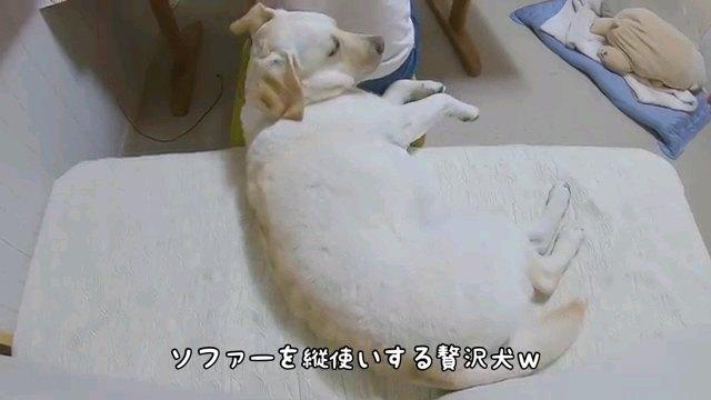 ソファーを~字幕