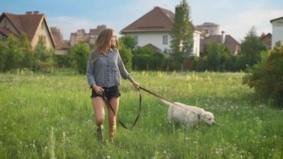 草むらの中をお散歩する犬と女性