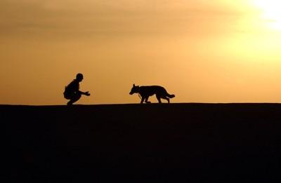 夕焼けバックの人と犬