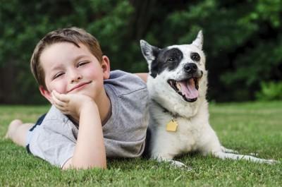 53363443  迷子札をつけている犬と少年