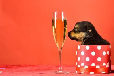 シャンパングラスと子犬