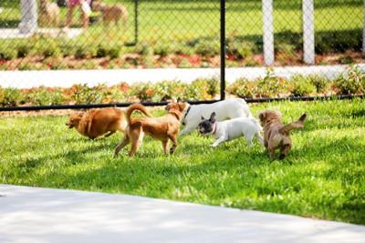フェンスの前に並んだ5頭に犬