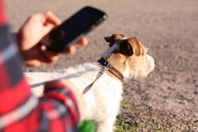 犬の散歩中にスマホチェックをする人