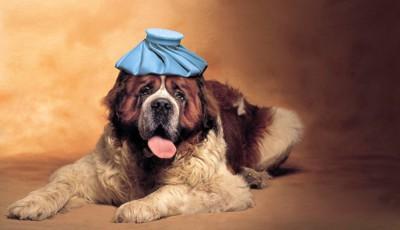 暑がっている犬の写真