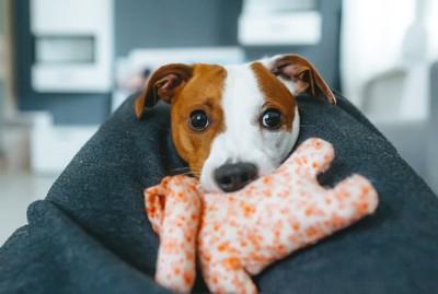 おもちゃを咥える犬