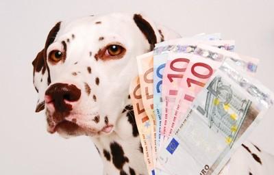 紙幣とダルメシアン