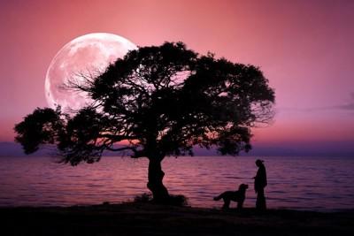 月をバックにした犬と人間