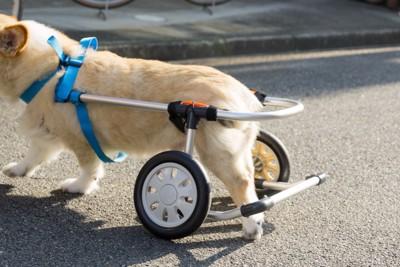 車椅子を装着した犬