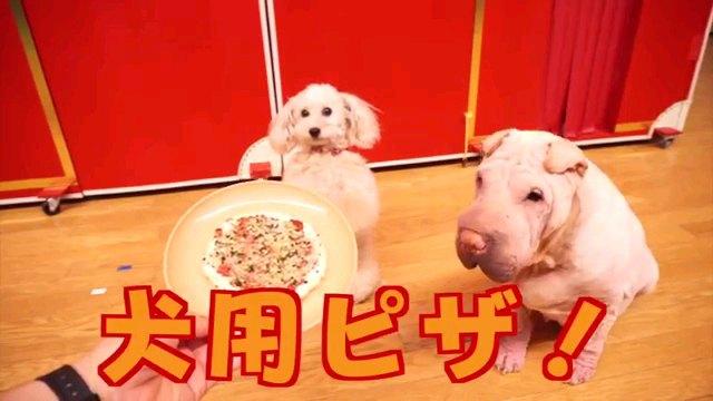 犬用ピザ!~字幕