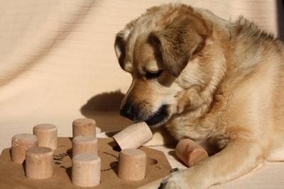 木製の知育玩具と垂れ耳と犬