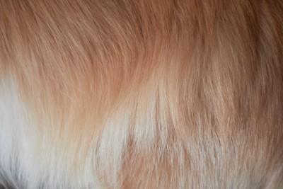 犬の毛並みアップ
