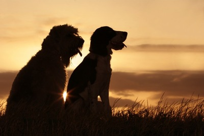2匹の犬のシルエット