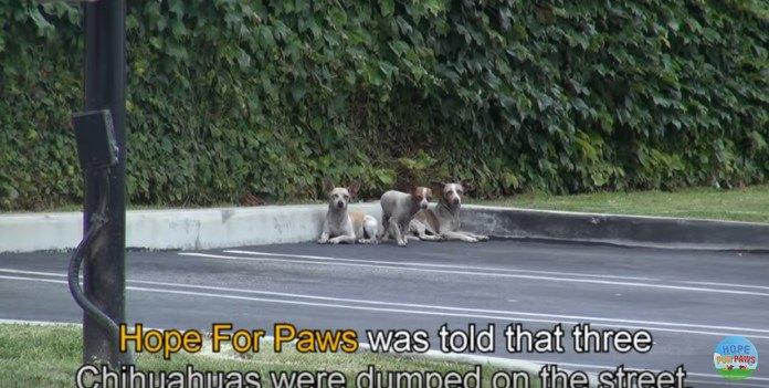 駐車場にいる犬たち