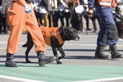 素足で歩く災害救助犬