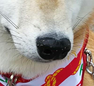 砂が付いた犬の鼻