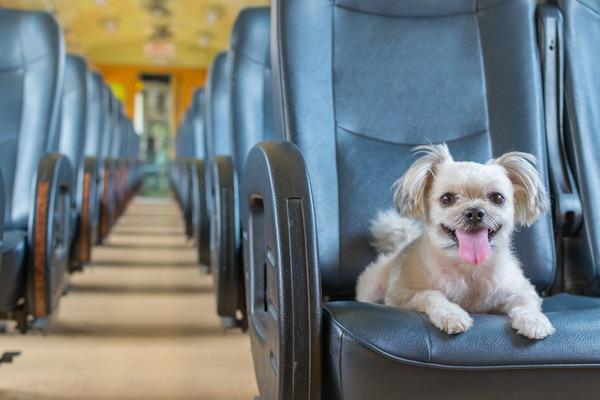電車の席に座っている犬