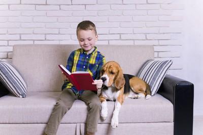 ソファーで本を読む男の子に寄り添うビーグル犬