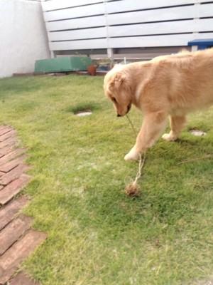 前足で枝をおさえる