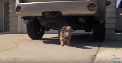 車の下から出る犬