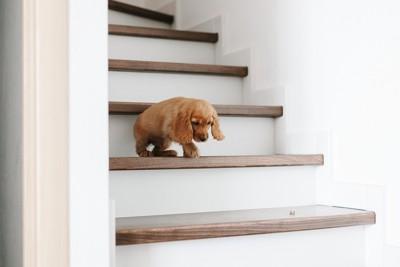 階段を降りようとする犬