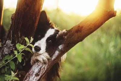 木の間から覗く犬