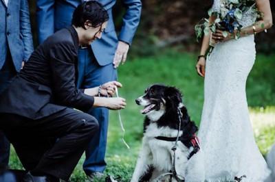 犬から指輪を貰う新郎と新婦