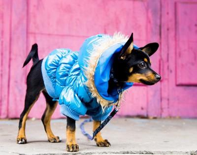 しっかりした服を着ている犬