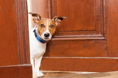 扉から覗き込んでいる犬