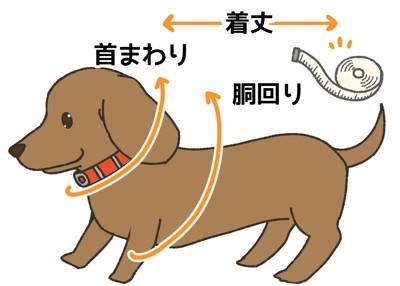 犬の首まわり、胴回り、好みの着丈を測る