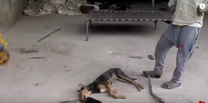 倒れている犬