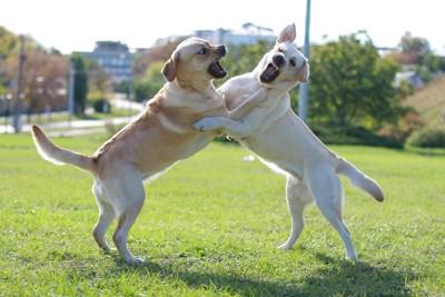 ケンカしている2頭の犬