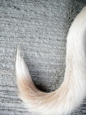 犬の尻尾のアップ