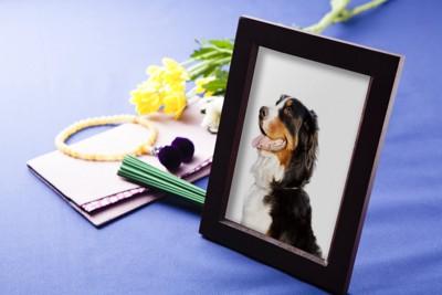 犬の肖像画と数珠とお線香